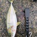 ジョジョジョさんの兵庫県南あわじ市での釣果写真