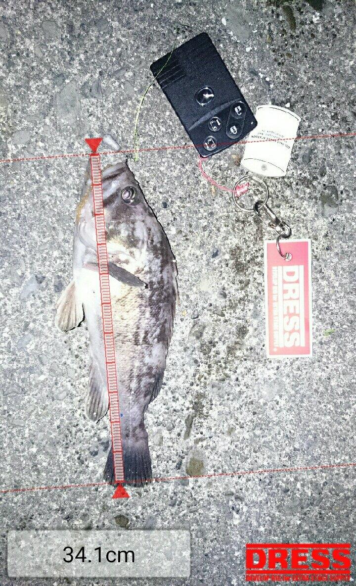 たーたんさんの投稿画像,写っている魚はクロソイ