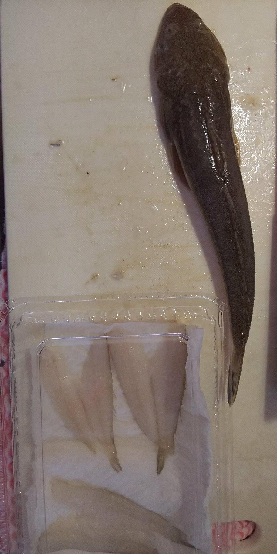 しゅんぺきさんの投稿画像,写っている魚はコチ,シロギス