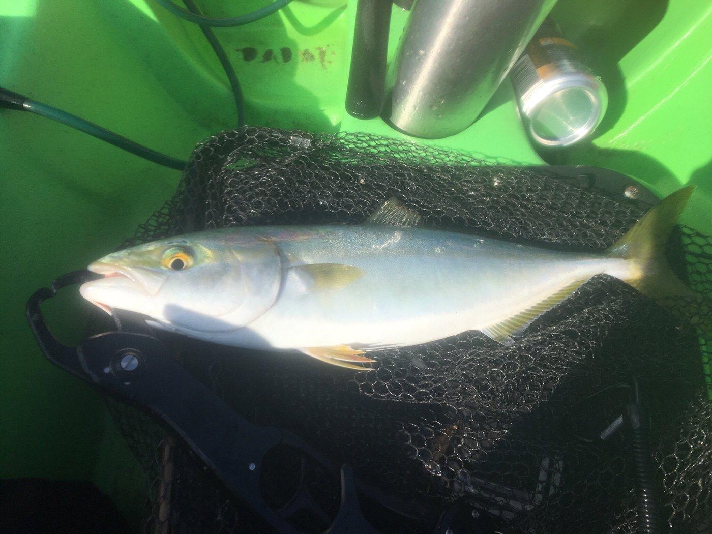 Yoichiさんの投稿画像,写っている魚はブリ