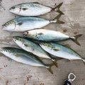 こーへーさんの茨城県鹿嶋市での釣果写真
