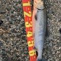 Kazu さんの岐阜県郡上市での釣果写真