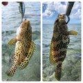 はやとさんの沖縄県宜野湾市での釣果写真