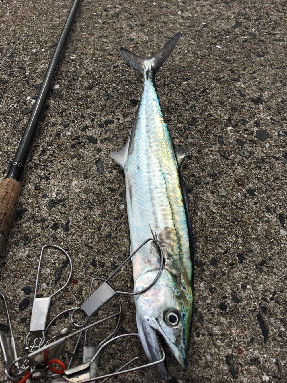 JETさんの投稿画像,写っている魚はサワラ