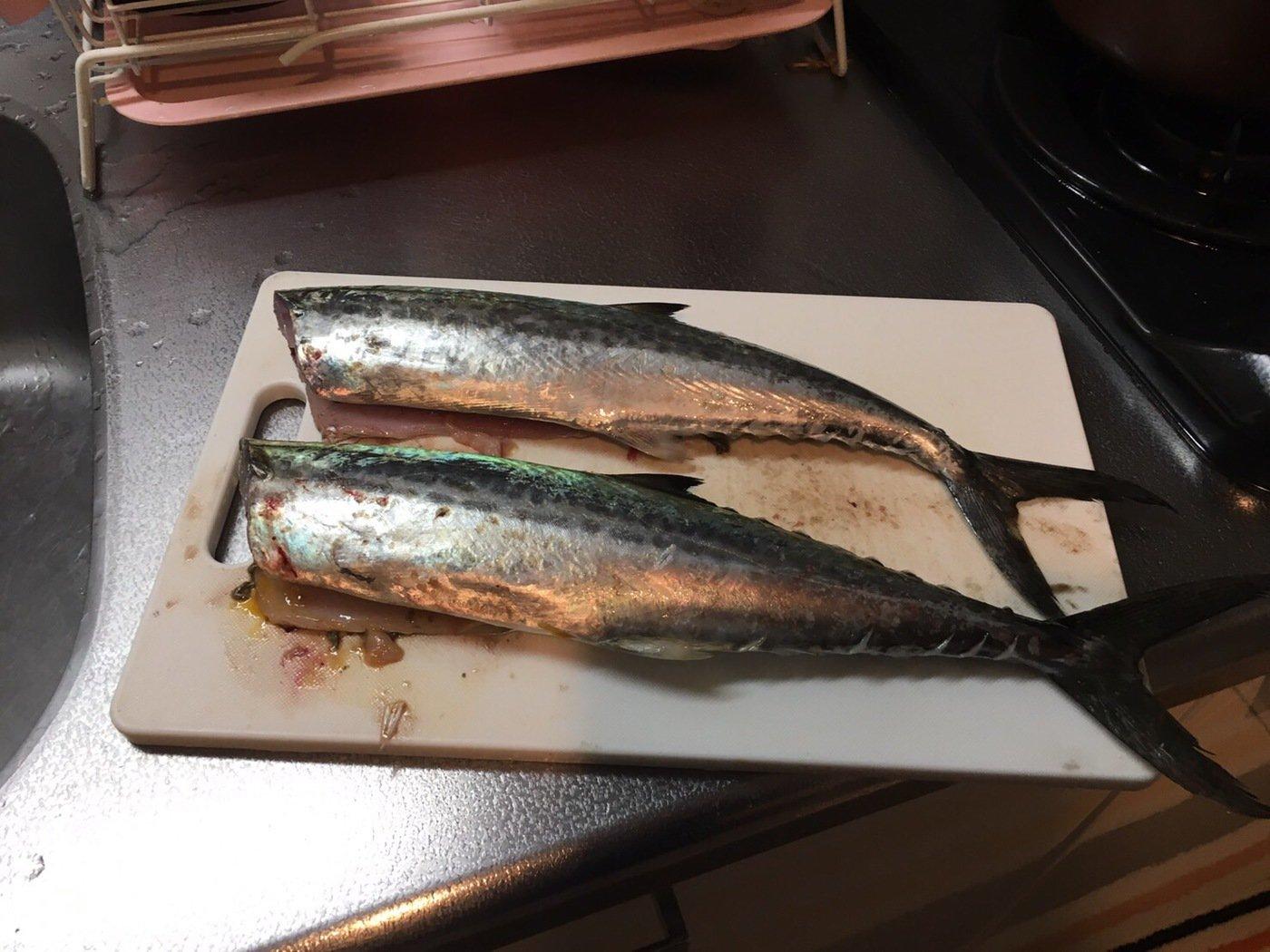ともさんの投稿画像,写っている魚はサワラ