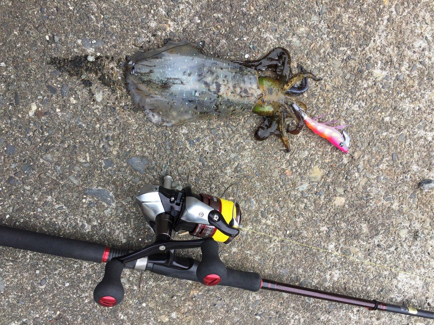 ライスよしおさんの投稿画像,写っている魚はアオリイカ