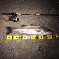 はちさんの兵庫県高砂市での釣果写真
