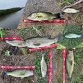 ma-kouさんの茨城県土浦市での釣果写真