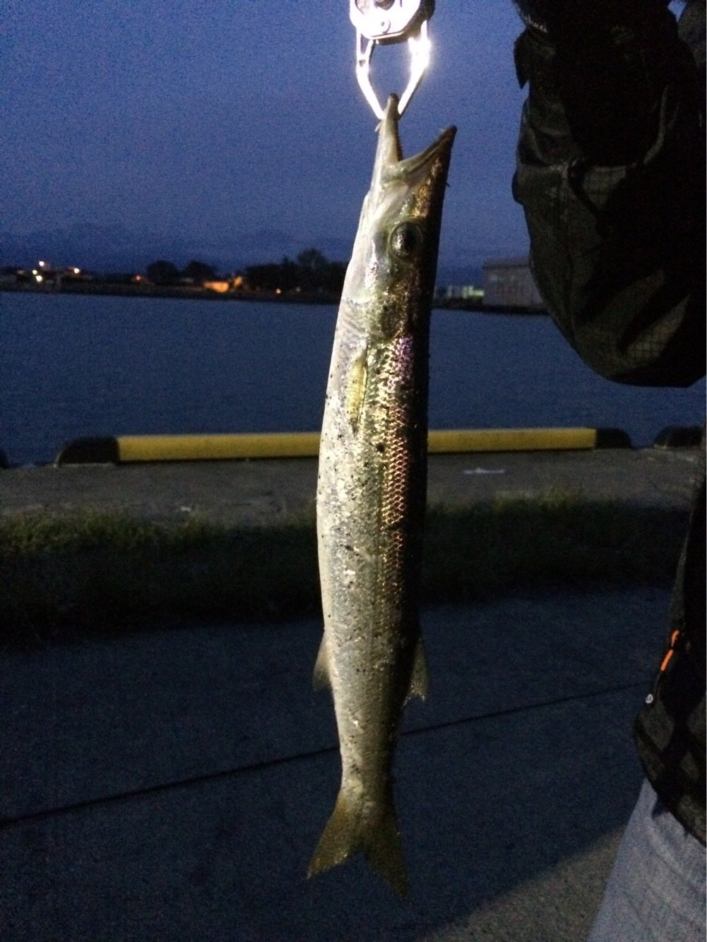 Alexさんの投稿画像,写っている魚はカマス