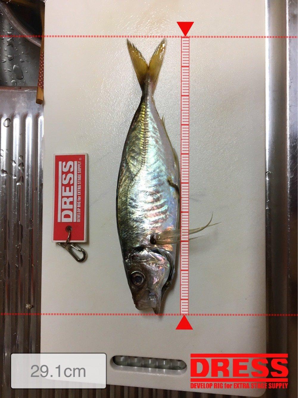 Miyaさんの投稿画像,写っている魚はアジ