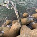 yumeさんの兵庫県加古郡での釣果写真