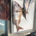 まつのさんの広島県東広島市での釣果写真