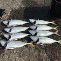 りょーへいさんの茨城県鹿嶋市での釣果写真