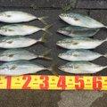 cspさんの茨城県鹿嶋市での釣果写真
