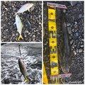 ヒロッシーさんの静岡県でのコチの釣果写真