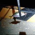 9 Odatefさんの宮城県名取市でのアジの釣果写真