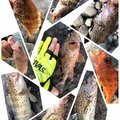 たこたかさんの静岡県沼津市でのカサゴの釣果写真
