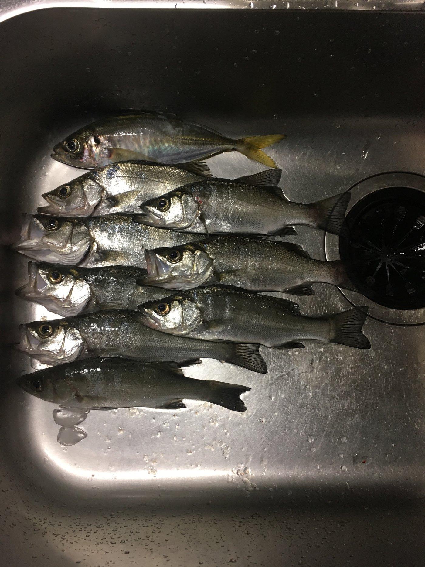 subaさんの投稿画像,写っている魚はアジ,ヒラスズキ