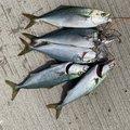 Mr.NRHDさんの茨城県鹿嶋市での釣果写真