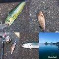 hiroさんの静岡県でのシイラの釣果写真