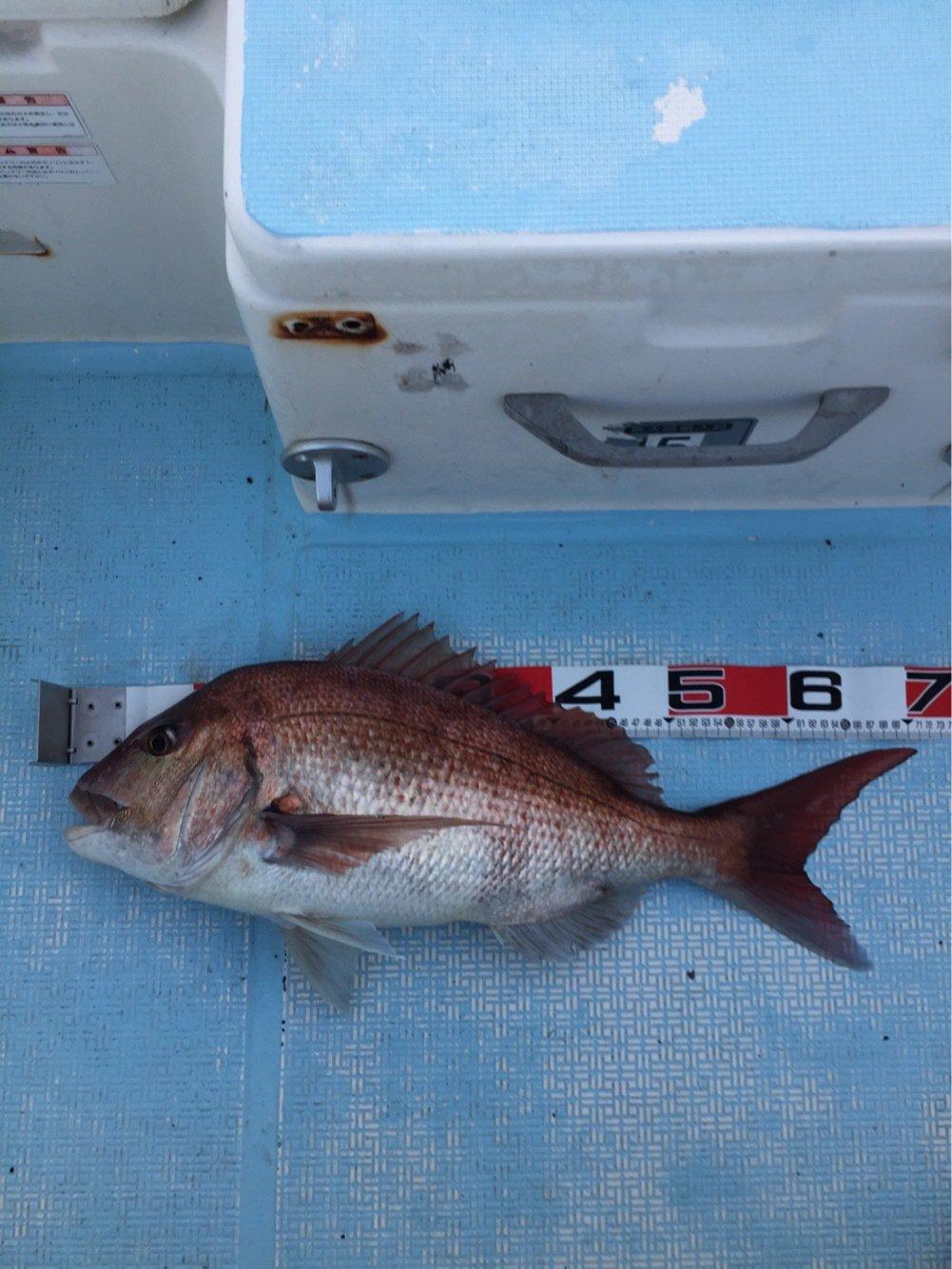 海碧丸さんの投稿画像,写っている魚はマダイ