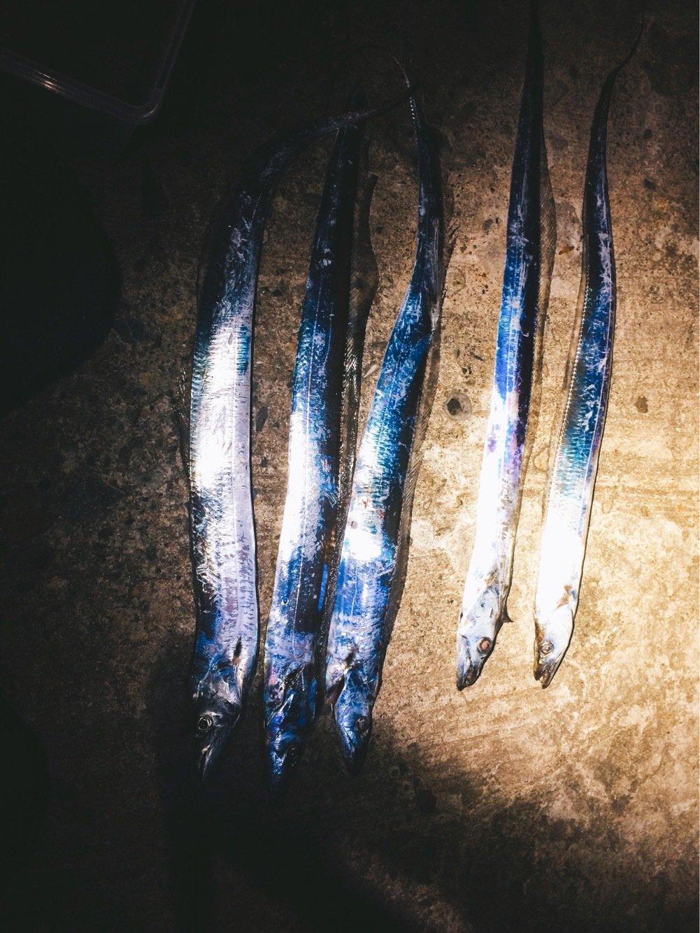 Light®️iggerさんの投稿画像,写っている魚はタチウオ