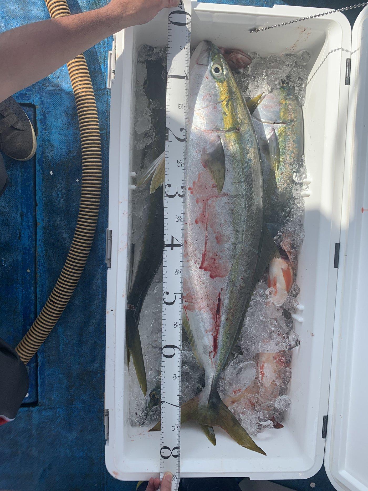ルイ・エクシヴさんの投稿画像,写っている魚はブリ,ソイ,メバル
