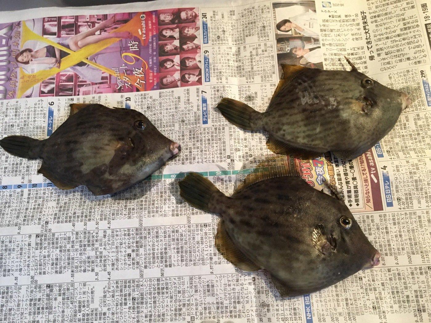 イワポン55さんの投稿画像,写っている魚はカワハギ