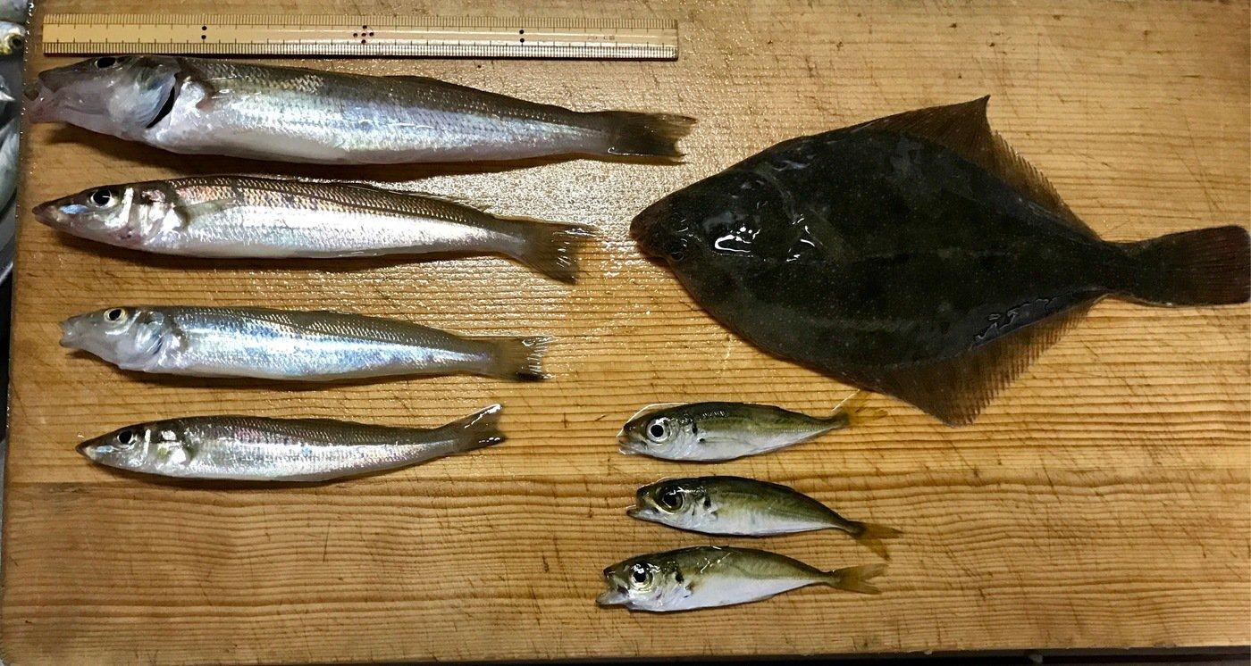 yukiyさんの投稿画像,写っている魚はシロギス