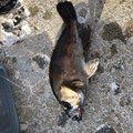 根掛権蔵さんのメバルの釣果写真