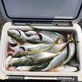 やっぱり海が好きさんの静岡県下田市での釣果写真
