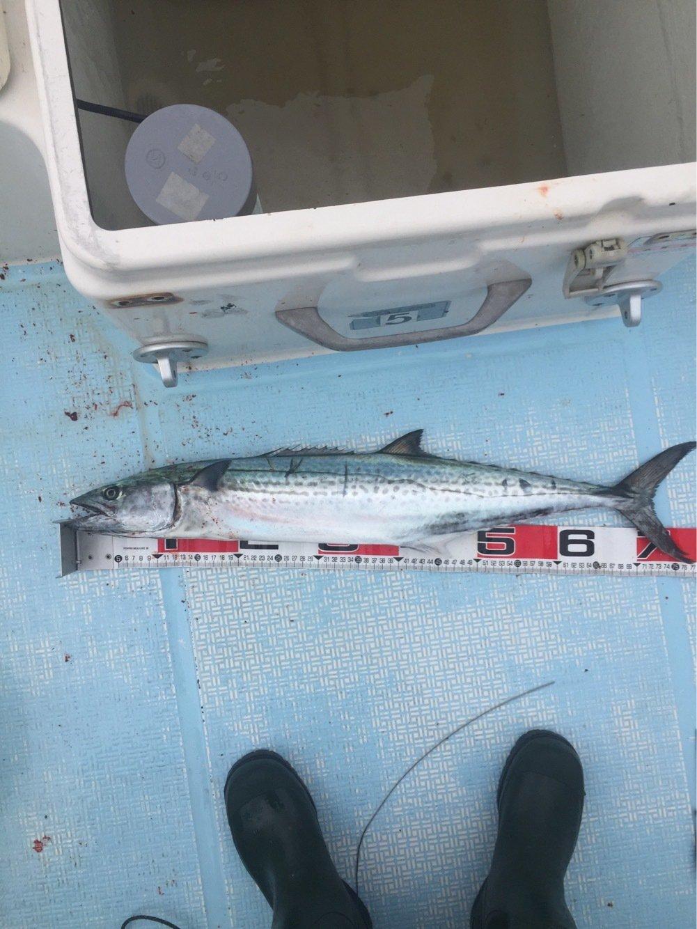 海碧丸さんの投稿画像,写っている魚はサワラ