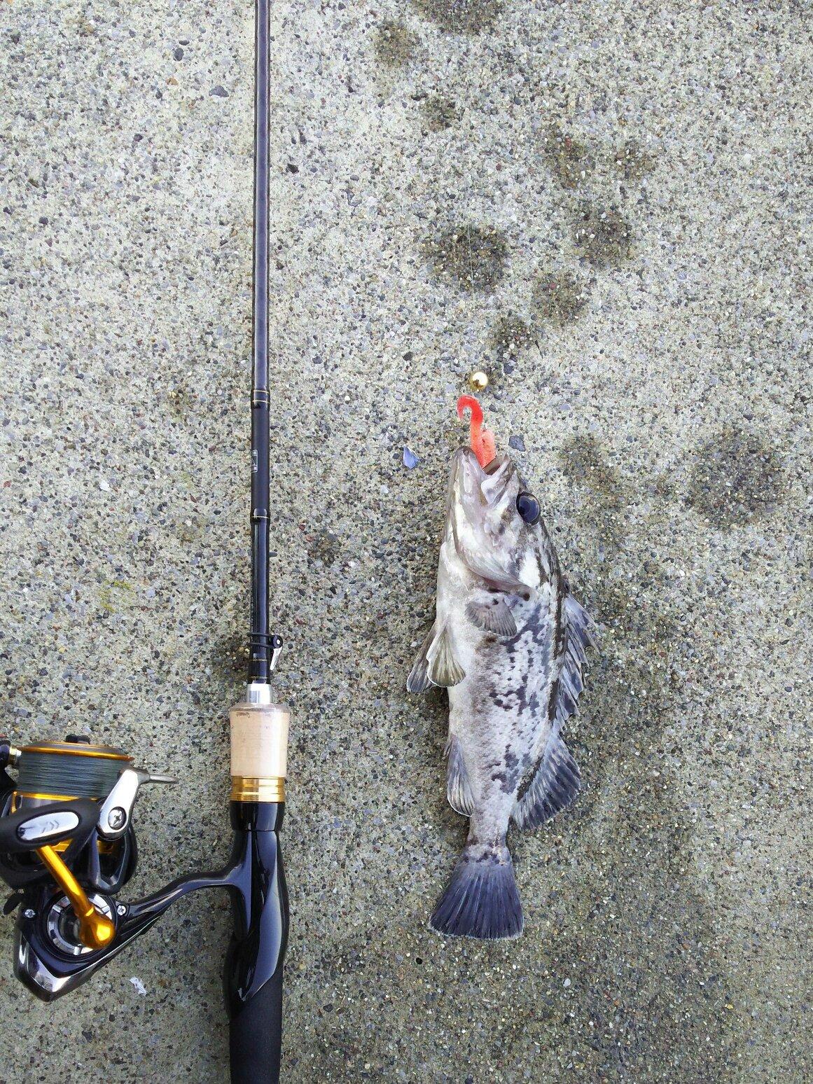 キャンディーさんの投稿画像,写っている魚はクロソイ