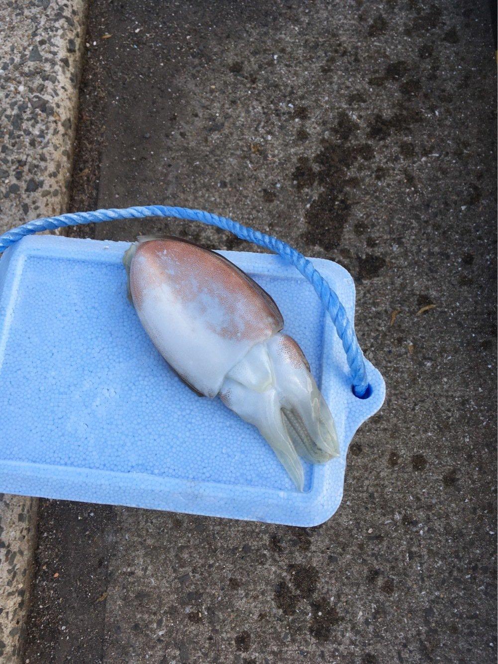 ジョージさんの投稿画像,写っている魚はコウイカ