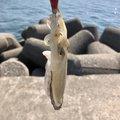 HIRO.Yさんの新潟県長岡市での釣果写真