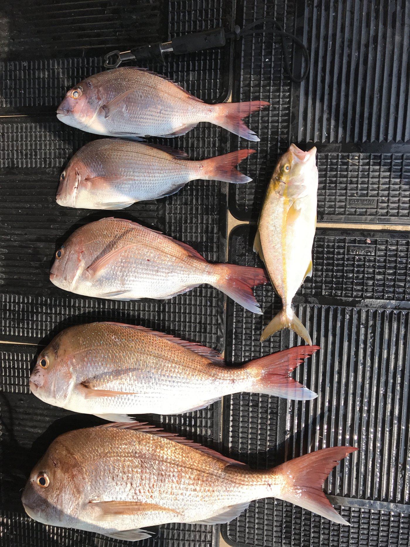 ザッキさんの投稿画像,写っている魚は