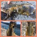 のっっっちさんの福井県三方郡での釣果写真