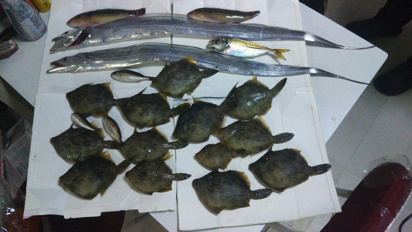 ツルツルさんの投稿画像,写っている魚はタチウオ