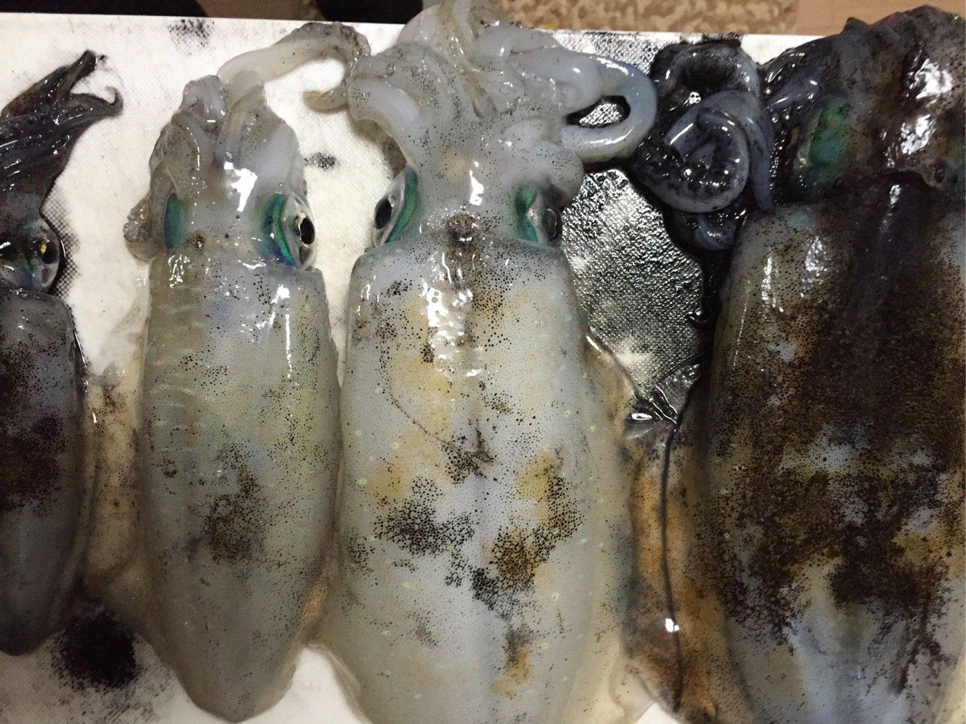 ファーさんの投稿画像,写っている魚はアオリイカ