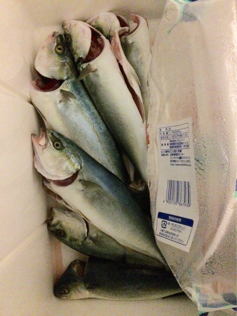 スズキリさんの投稿画像,写っている魚はカンパチ