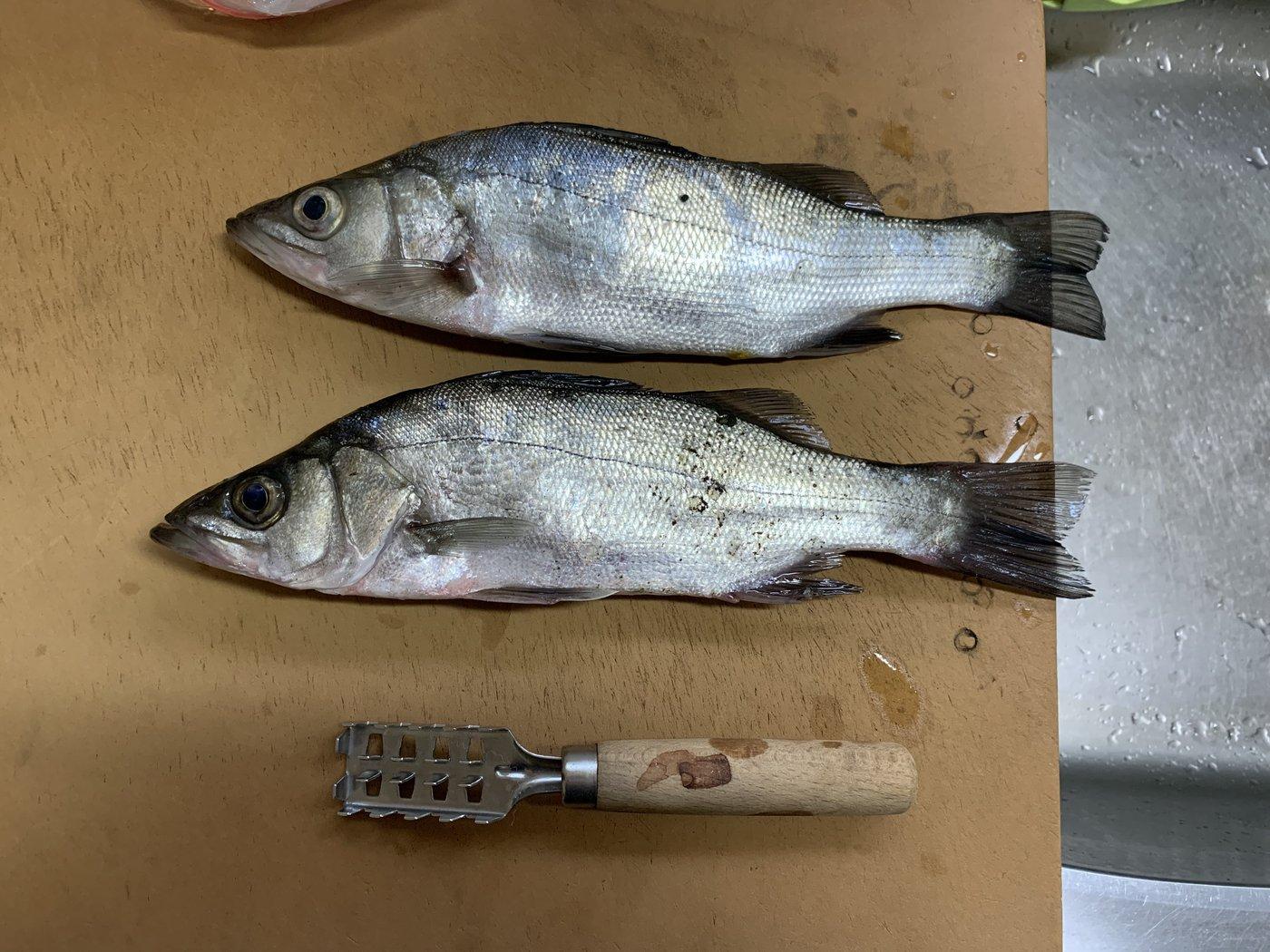 はげさんの投稿画像,写っている魚はスズキ