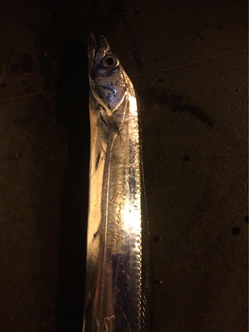 のすけさんの投稿画像,写っている魚は