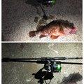 しんもっちさんの静岡県沼津市でのカサゴの釣果写真