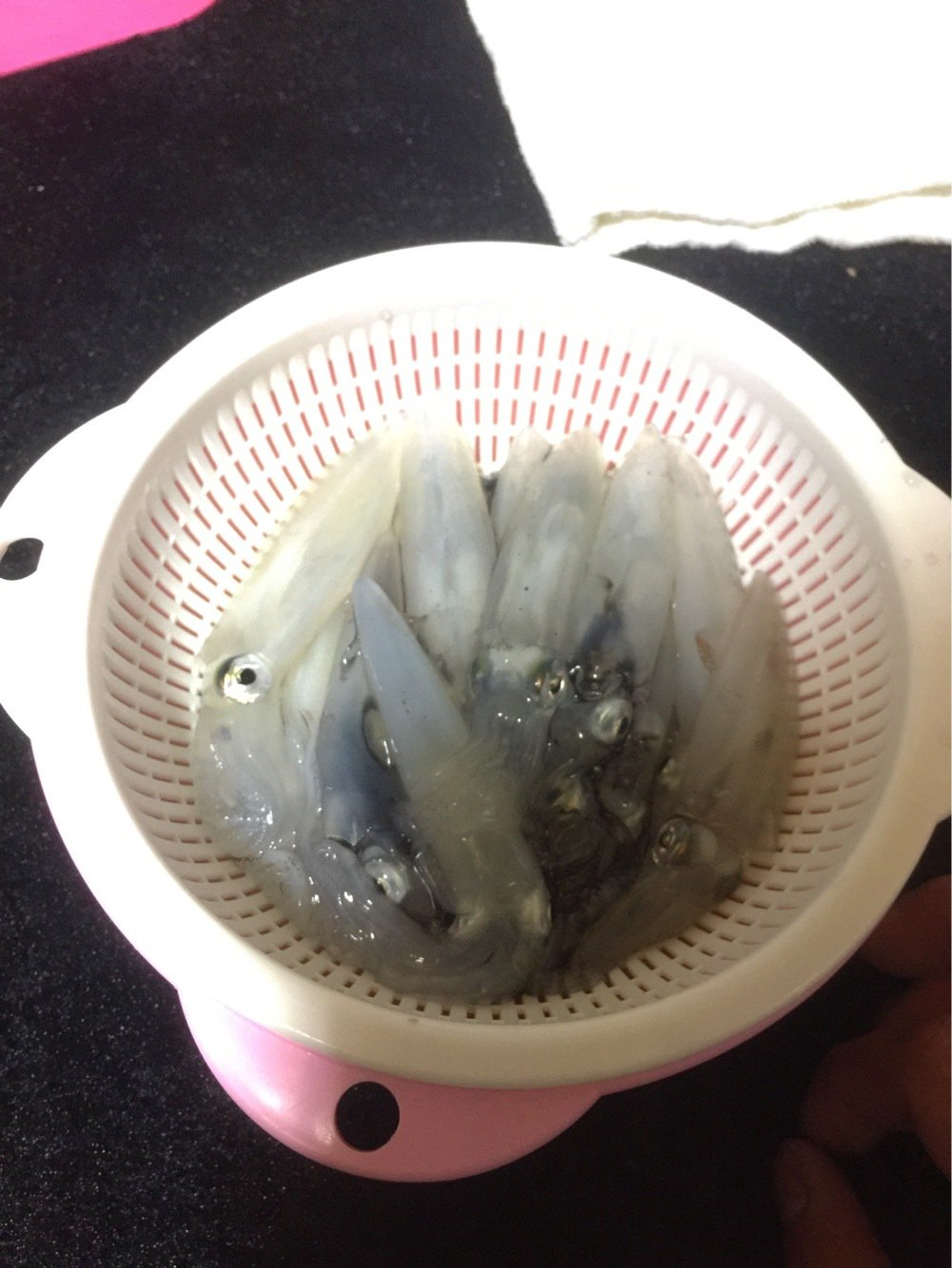 クラゲさんの投稿画像,写っている魚は