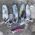 タライフさんの和歌山県和歌山市での釣果写真