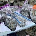 キンパツタラオさんの新潟県岩船郡での釣果写真