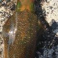 ちゃーりんさんの山口県萩市でのアオリイカの釣果写真