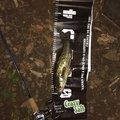 ほんだひろゆきさんの青森県三沢市での釣果写真