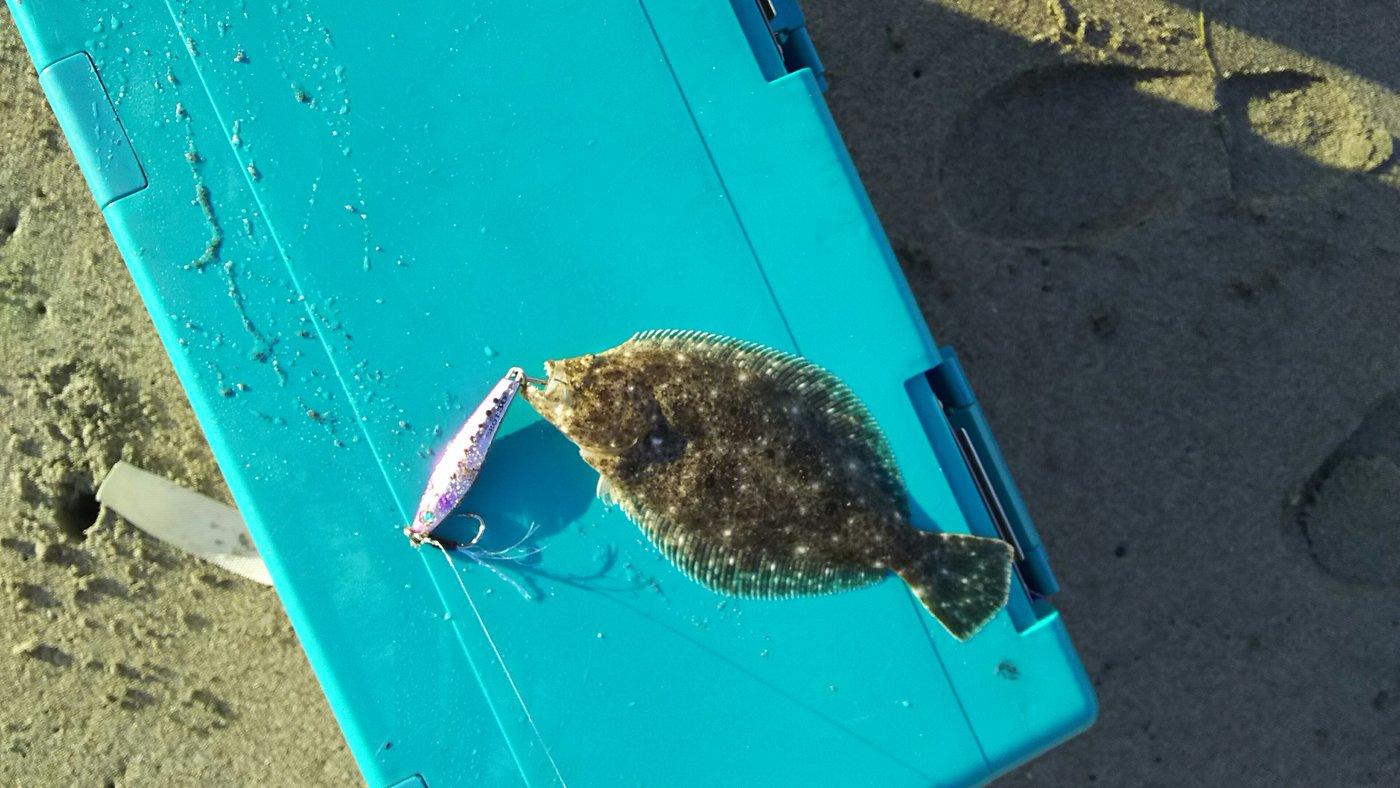 パッチ★☆さんの投稿画像,写っている魚はヒラメ