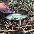 たばたりくとさんの岩手県盛岡市での釣果写真